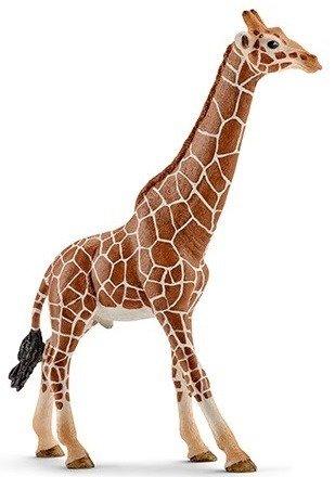 Schleich (SLH14749): Samiec żyrafy